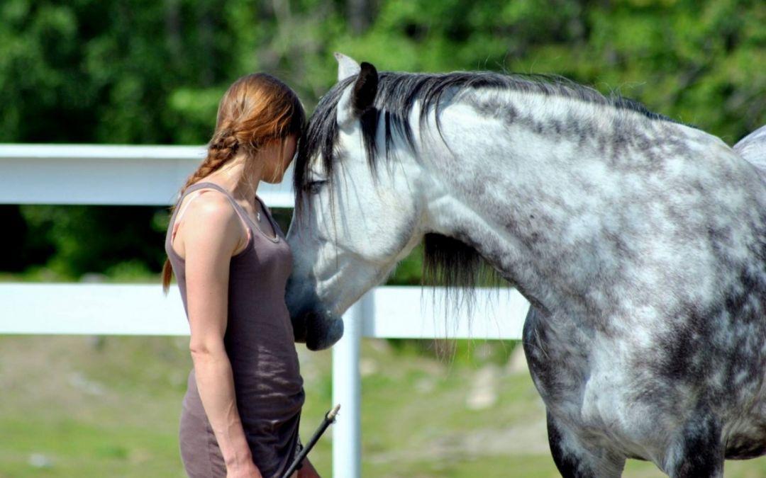 En dypere kontakt og forståelse av hesten og deg selv